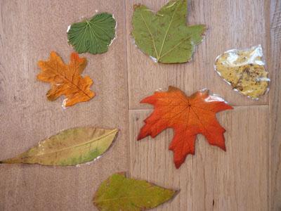 Blätter Pressen blätter puzzle kindersuppe abo
