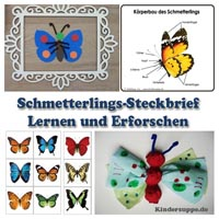 Projekt Schmetterling Und Raupe Kindergarten Und Kita Ideen