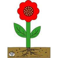 Projekt Blumen und Pflanzen Kindergarten und Kita-Ideen