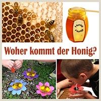 Projekt Bienen Kindergarten Und Kita Ideen