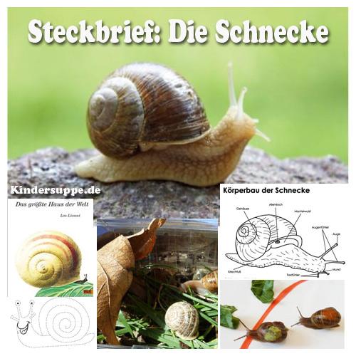 Steckbrief Schnecke Ideen fur Kindergarten und Kita