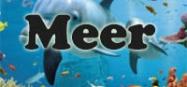 Kindergarten Projekt am Meer und Tiere